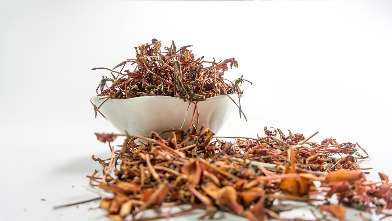jungle gernnium, rubiaceae, flowers
